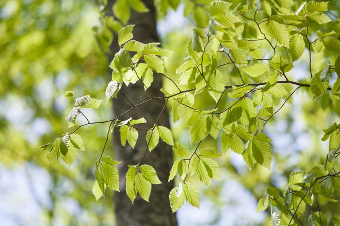 早春の美人林
