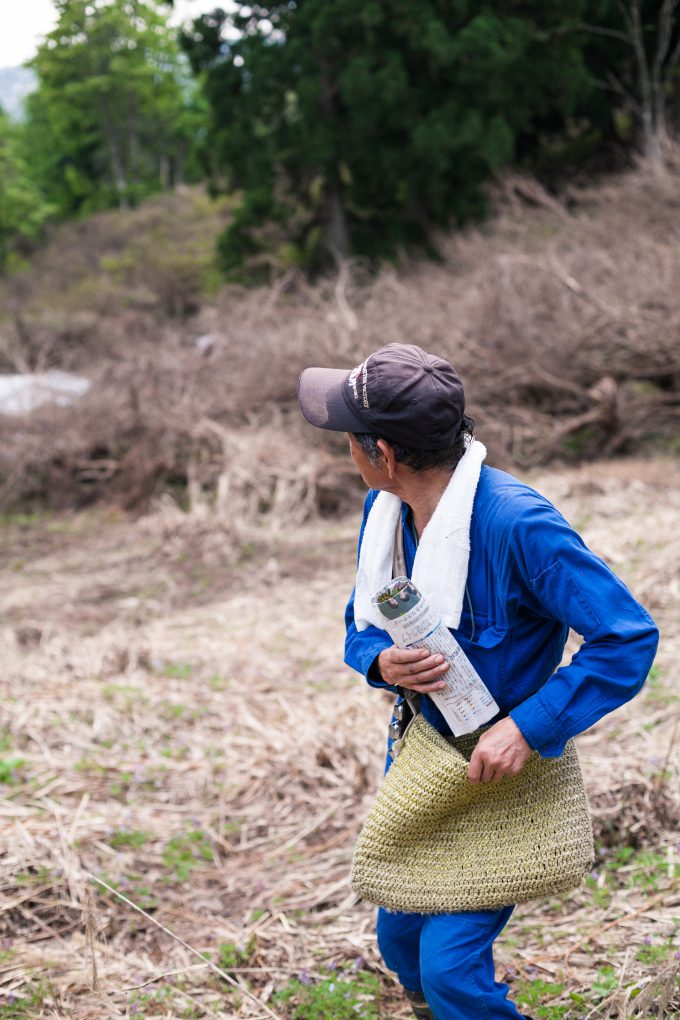 木の芽を採る滝沢博さん